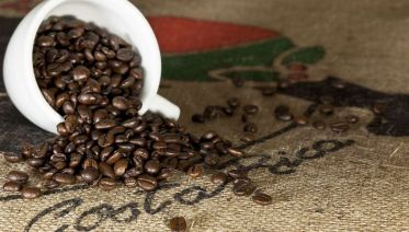 Coffee & Chocolate Tour in Monteverde