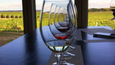 Cold Climate Wines of Niagara