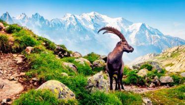 Complete Tour du Mont Blanc in Comfort