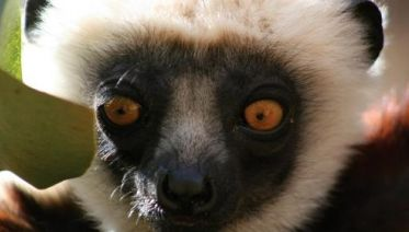 Culture & Wildlife Of Madagascar