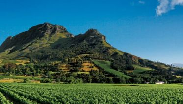 Custom Full Day Private Wine Tour from Paarl