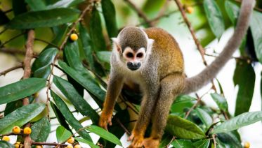 Cuyabeno Reserve Rainforest Tour - 5 days