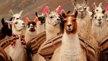 Cycle Peru: Machu Picchu & Titicaca