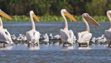 Danube Delta Discovery
