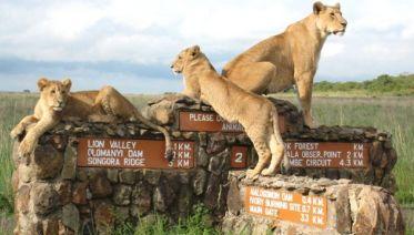 Day Tour - Nairobi National Park, Elephant & Giraffe Park