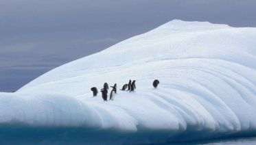 Discover Antarctica 11 days from Ushuaia