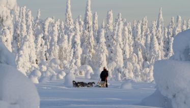 Dogsledding in Oulanka National Park