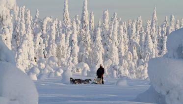 Dogsledding In Oulanka National Park
