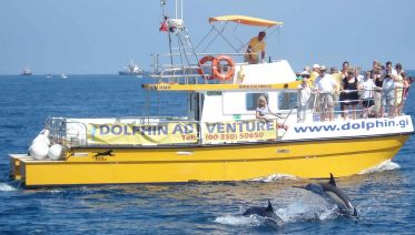 Dolphin watching in Gibraltar