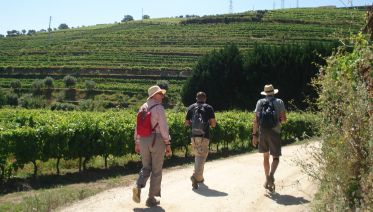 Douro Valley Hike