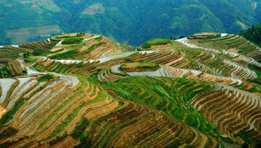 Dragon's Backbone Rice Terraces Full-day Tour