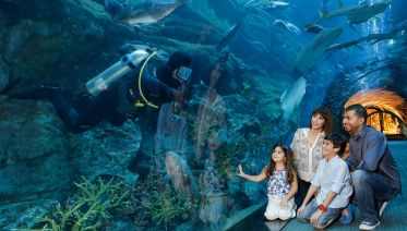 Dubai Aquarium & Underwater Zoo - Tunnel + Zoo