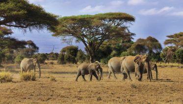 East Africa Adventure