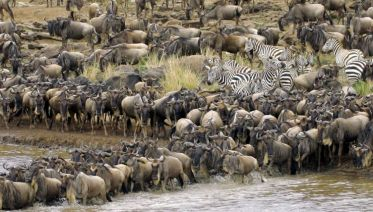 East Africa Migration Safari - Limited Edition