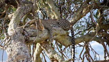 Lower Zambezi National Park Tours