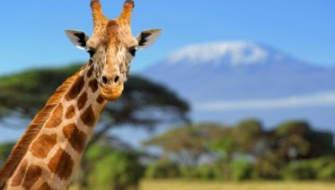 East African Explorer, Keekorok And Serena Lodges - Private Tour