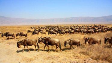 East African Odyssey
