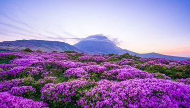 Eastern Korea, Seoul & Jeju Island In 10 Days