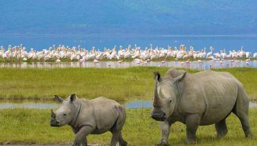 Eight-Day Wildlife Safari & Game Drive in Tanzania
