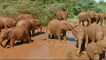 Elephant Orphanage Tour From Nairobi