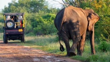 Encounter Sri Lanka for Solo Travellers
