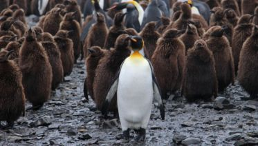 Epic Antarctica: Falklands, South Georgia & Antarctic Circle Crossing