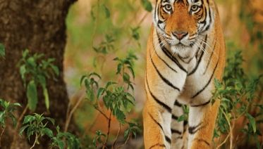 Essence Of India With Ranthambore