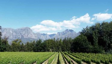 EXCLUSIVE STELLENBOSCH WINE TOUR