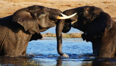Experience Southern Africa