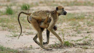 Explore Nyerere National Park