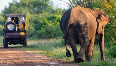 Explore Sri Lanka Under 39's