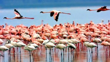 Explore Tanzanian Nature & Culture - 11 Days