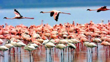 Explore Tanzanian Nature & Culture - 11 Days