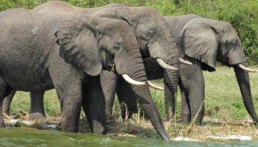Explore Uganda: Ten-Day Safari