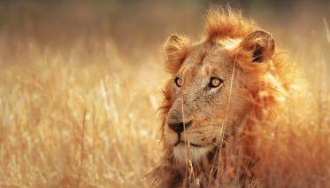 Family Kruger, Kwazulu And Coast