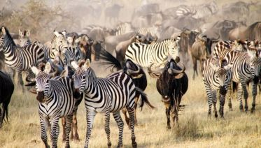 Family Serengeti, Safari And Zanzibar
