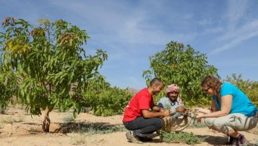 Farming in the Egyptian Desert (Dahab)