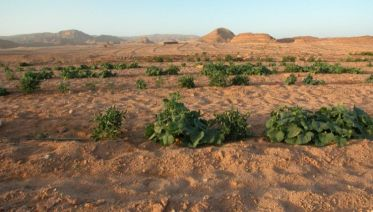 Farming In The Egyptian Desert (Sharm El-Sheikh)
