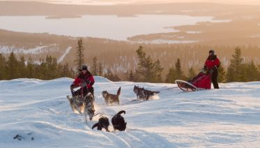 Finnish Dogsledding Adventure