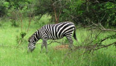 Five Day Gorilla Trekking & Wildlife Safari in Uganda