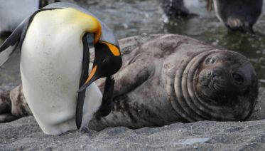 Fly & Cruise - Falkland Islands, South Georgia & Antarctica (Cruise North)