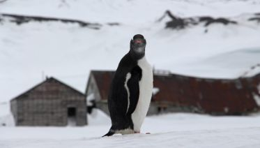 Fly & Cruise: Ultimate Christmas in Antarctica