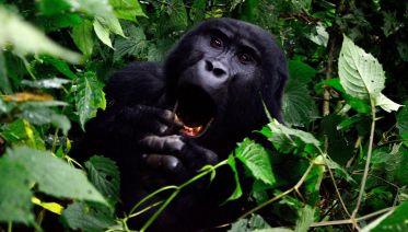 Four Day Gorilla Trekking Safari