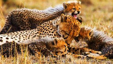 Four-Day Safari: Serengeti NP and Ngorongoro Crater