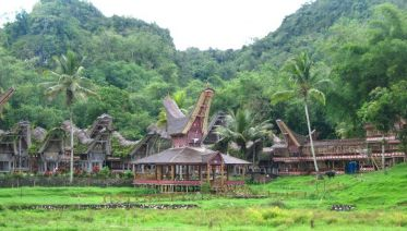 Four Day Tana Toraja Adventure