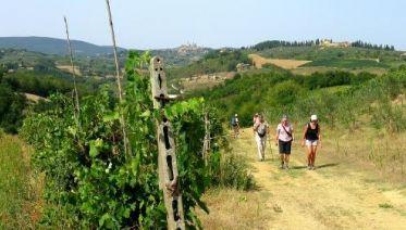 Francigena Way: Best of Tuscany