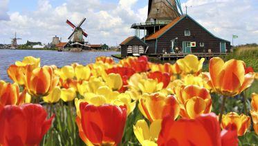 From Amsterdam: Live guided Keukenhof & Zaanse Schans