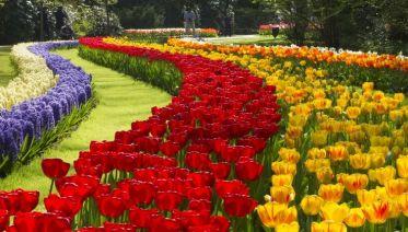 From The Hague: Keukenhof & Flowerfields