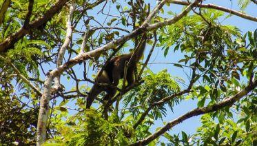 Full Costa Rica Adventure 14D/13N