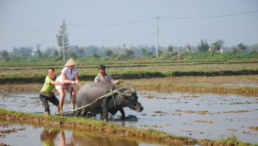 Full-day Cycling in Hoi An & Tra Que Village